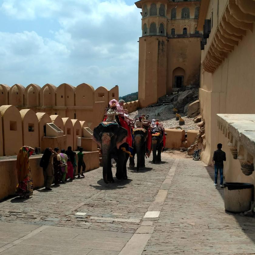 Elephant rides in Amer fort Premises