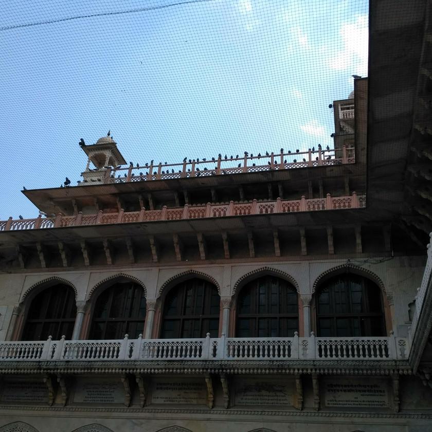 Pigeons flocked on Albert Hall Terrace
