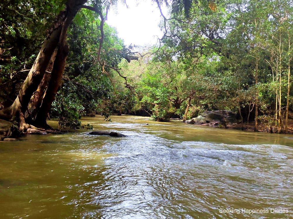Mangroves of Kaveri River, Coorg