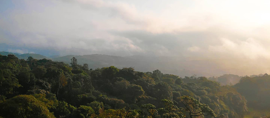 Not far from home - A weekend escape to Coorg amidst the pandemic!