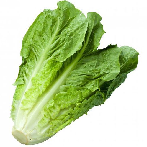Washed Cos Lettuce Each