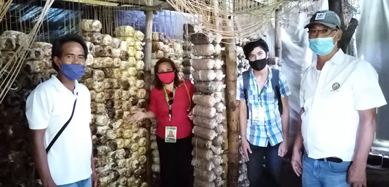 Mushroom Production Beneficiaries in the Municipality of Paniqui, Tarlac. Shown in the photo are Ms. Judy Sorsano, MAO George Payumo and Mushroom Beneficiaries