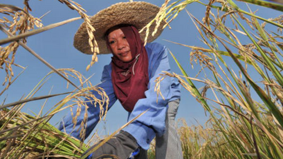 Programa Para sa mga Kababaihan sa Agrikultura, Binabalangkas ng DA