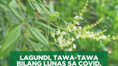 Lagundi, Tawa-Tawa Bilang Lunas sa COVID, Pag-aaralan ng DOST