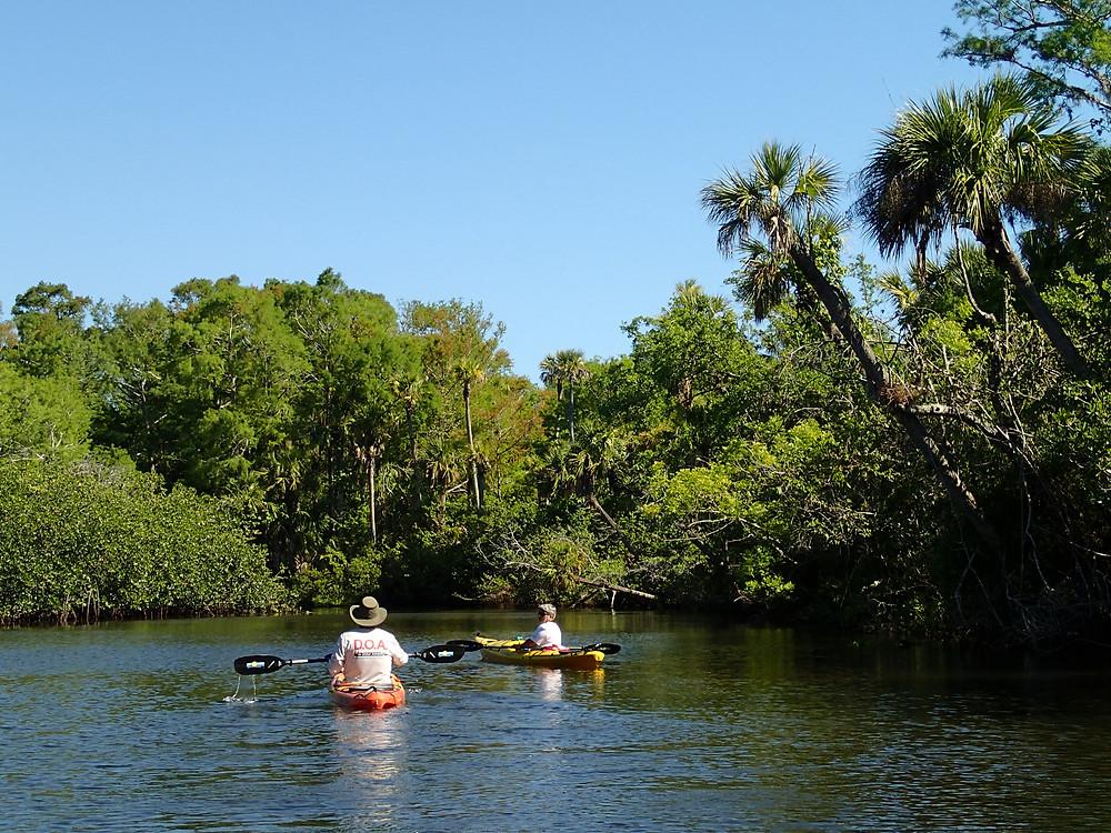 Kayaking Loxahatchee
