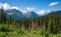 Along Icefield Parkway