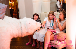 Animal Walkabout Acts for Wedding