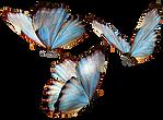 AGLCF Butterflies