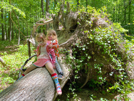 girls on tree.jpg