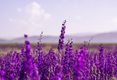 flowers-5383054_1280.jpg