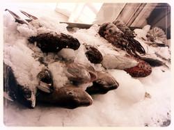 Fresh local Fish & Seafood