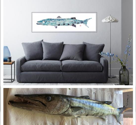 Original Barcuda