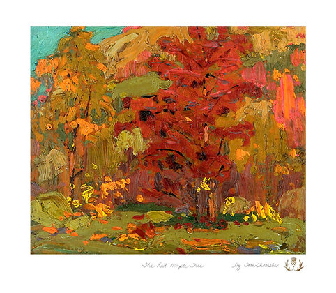 The Red Maple Tree