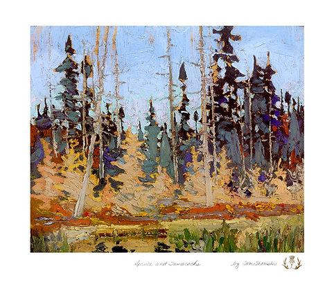 Spruce and Tamaracks