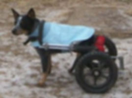 Poncho in his wheel chair