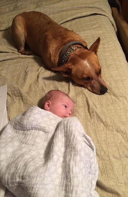 red heeler and baby