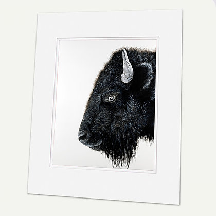 """Buffalo"" (Bison) Signed matted Giclée Print"