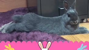 I got my first rabbit! Everything you need to know before getting a pet bunny