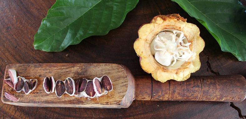 cacao 1.jpeg