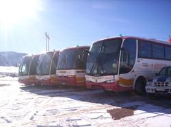 maricunga buses