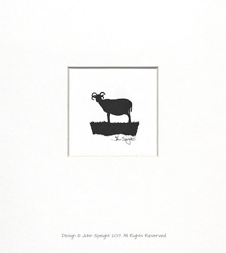 Hebridean Sheep - Standing