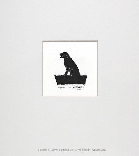 Labrador - Sitting, Panting