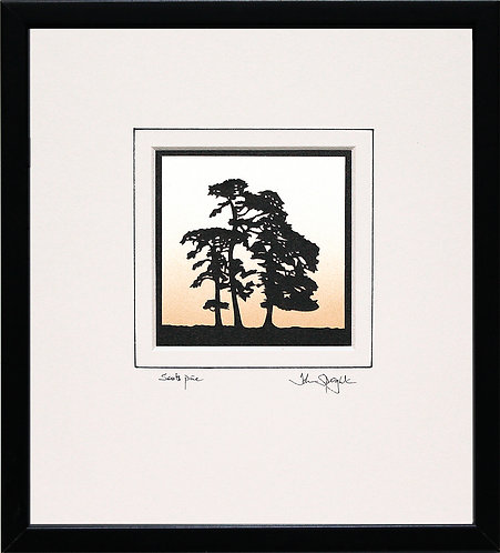 Scots Pine in Black Frame