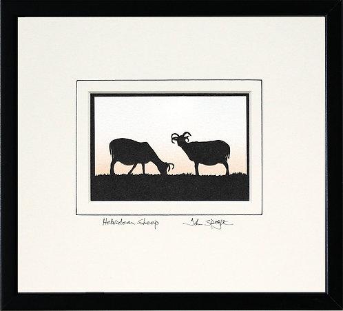 Hebridean Sheep in Black Frame