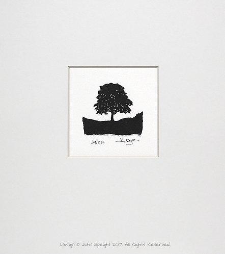 Robin Hood Tree, Sycamore Gap, Hadrian's Wall
