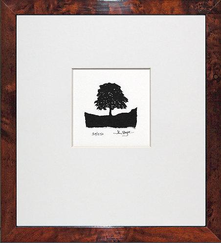 Robin Hood Tree, Sycamore Gap, in Walnut Veneer Frame