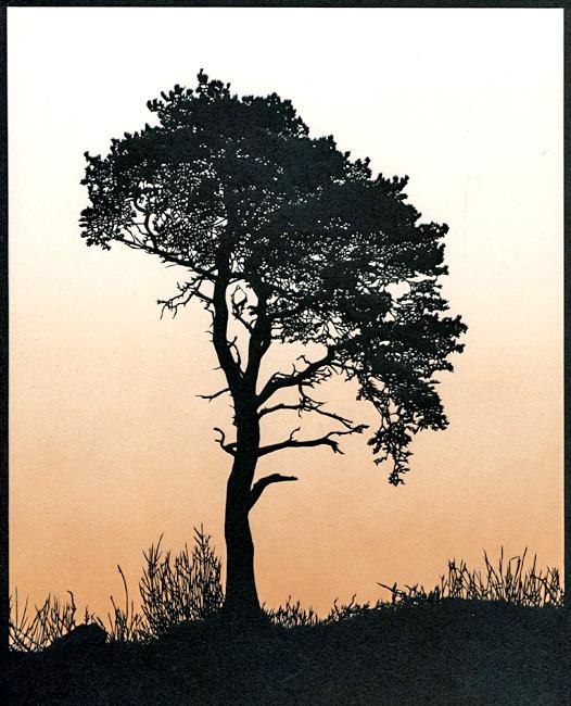 Scots Pine (Orange Sky)