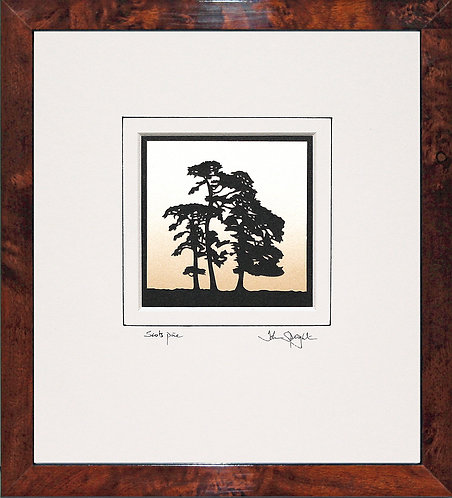 Scots Pine in Walnut Veneer Frame