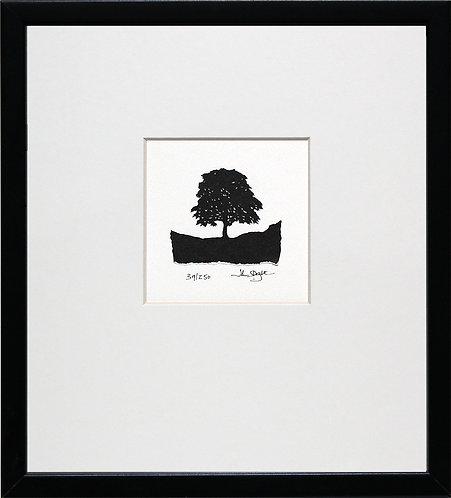 Robin Hood Tree, Sycamore Gap, in Black Frame