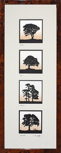 Beech, Oak, Scots Pine & Sycamore Quadruple in Walnut Veneer Frame