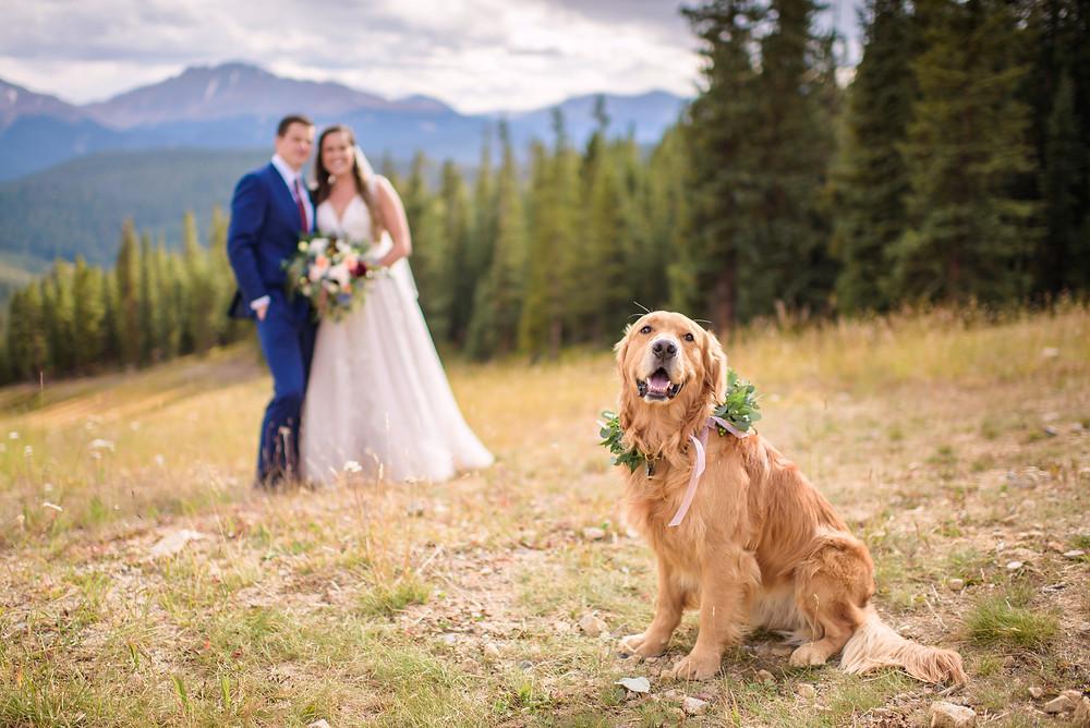 Keystone Wedding Dog, Timber Ridge Wedding