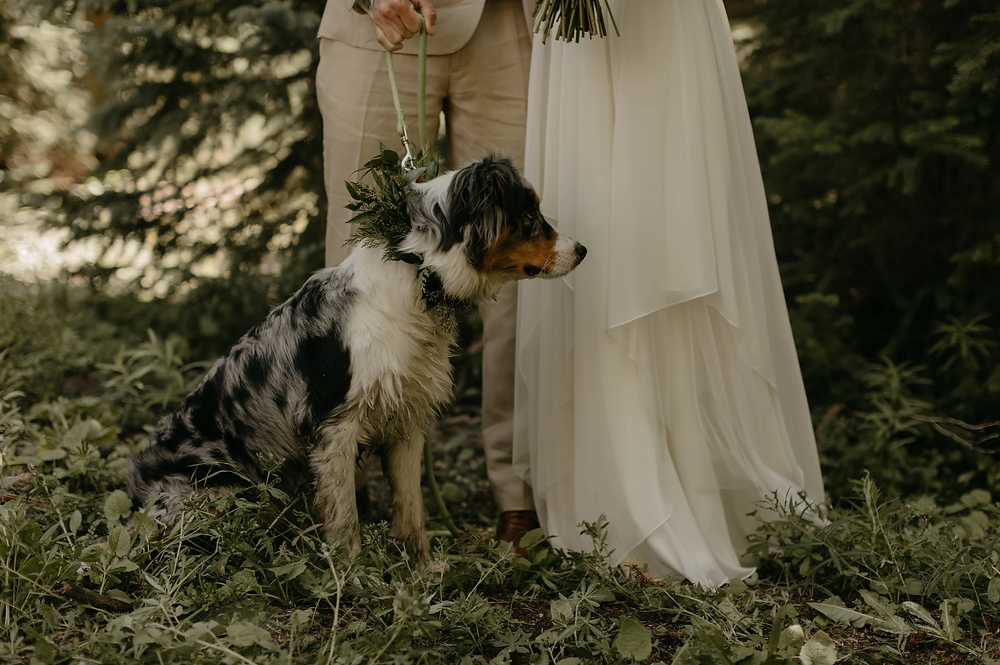 The Nordic Center Wedding - Breckenridge Wedding - Dog in Wedding