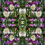 Tanya-Rose-Kaleidoscope-III.jpeg