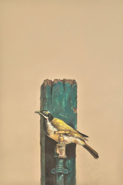 'Juvenile Blue Faced Honeyeater' by Isobelle Sirianni