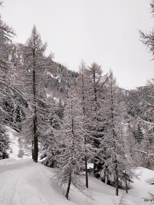 Ciaspolata 'La Costa del Bominallo - Domenica 21 febbraio