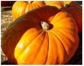 2018 Farmers' Market Pumpkin Fun Day at Channel Islands Harbor on Sunday, October 28th