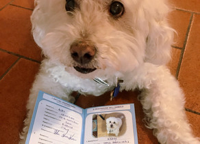 The EU Pet Passport (Florence)