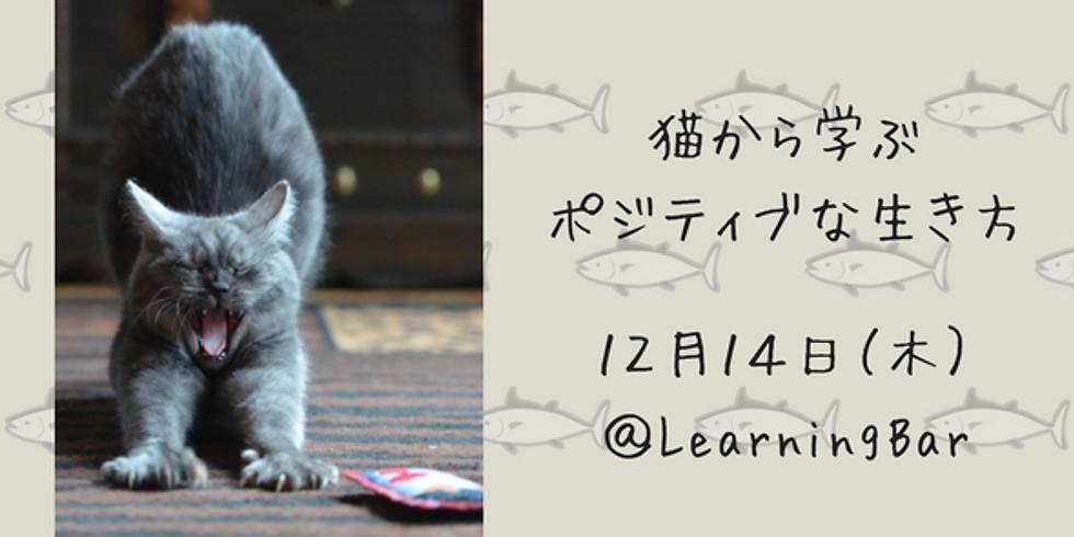 猫から学ぶポジティブな生き方