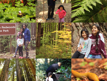 Giving back to the redwood forests