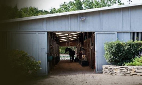 Our pristine 21 stall barn offers a huge amount of natural light and excellent ventilation to offer ideal conditions throughout the year for all horses.
