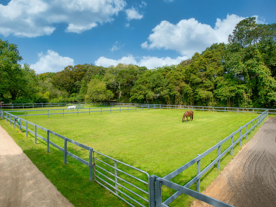 One of multiple grass paddocks perfect for individual turnout daily throughout the Spring and Summer months. All paddocks are carefully maintained throughout the year to assure continual grazing for all horses.