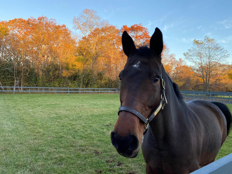 What Makes A Great Lesson Horse?
