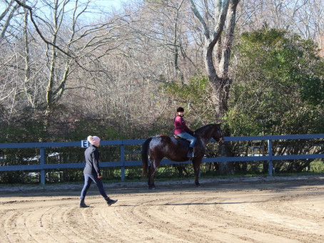 Being a Horse Trainer