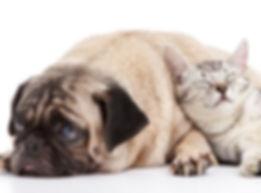 Cat_and_Dog-1.jpg