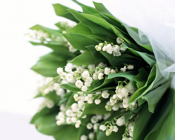 Lilies_of_the_Valley_(Lily-of-the-Valley