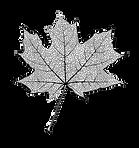 logo-of-maple-leaf-cut-outv2.png